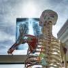 進化には2種類ある 「人体600万年史」書評その2