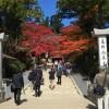 静かな高野山での紅葉が最高にうつくしい【高野山旅行0〜1日め】